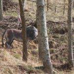 Löwe beim Winterturnierle